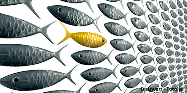 Sales Acceleratoin Summit  Fish